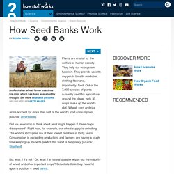 #3 How Seed Banks Work