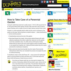 How to Take Care of a Perennial Garden
