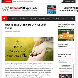 How To Take Good Care Of Your Dog's Paws?