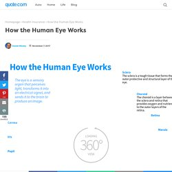 How the Human Eye Works - Quote.com®