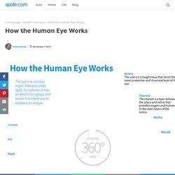 How the Human Eye Works - Animagraffs