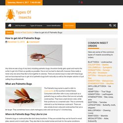 How to get rid of Palmetto Bugs
