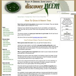 How To Grow A Neem Tree