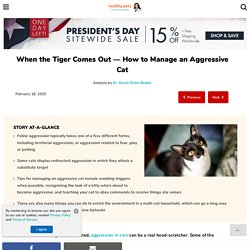 How to Manage an Aggressive Cat