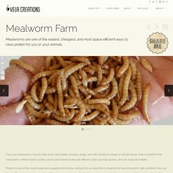 How To: Mealworm Farm