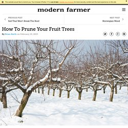 How To Prune Your Fruit Trees