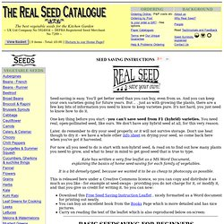 How To Save Your Own Seed at Home
