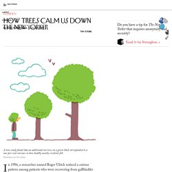 How Trees Calm Us Down