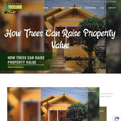 How Trees Can Raise Property Value
