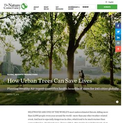 How Urban Trees Can Save Lives