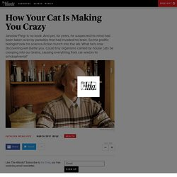 How Your Cat Is Making You Crazy - Magazine