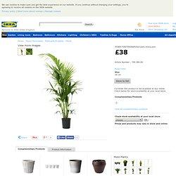 Plant pots & plants | Plants | HOWEA FORSTERIANA | Potted plant