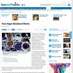 How Algae Biodiesel Works""