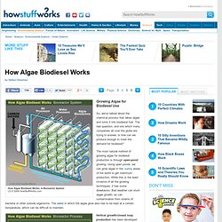 Growing Algae for Biodiesel Use""