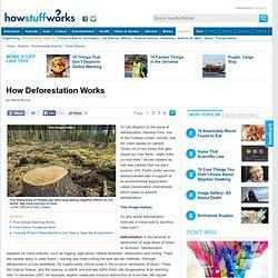 """How Deforestation Works"""""""