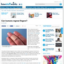 """Can humans regrow fingers?"""""""