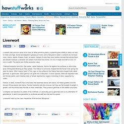 Liverwort