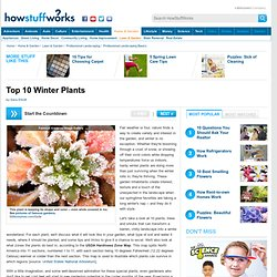 Top 10 Winter Plants""