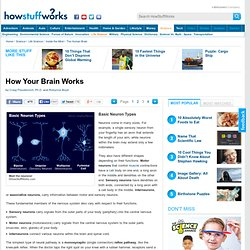 How Your Brain Works""