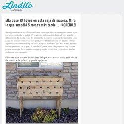 Ella puso 19 hoyos en esta caja de madera. Mira lo que sucedió 5 meses más tarde… ¡INCREÍBLE!