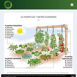 La huerta de 1 metro cuadrado - El Horticultor