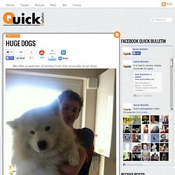 Huge dogs - Quick Bulletin