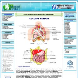 Corps humain organes tissus organe tissu tissulaire