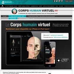 Le corps humain virtuel