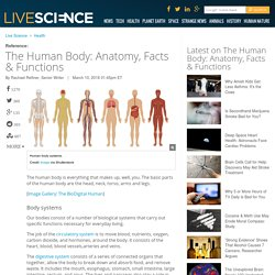 The Human Body: Anatomy, Facts & Functions