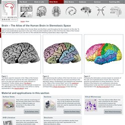 The Human Brain · Atlas of the Human Brain · Brain in Stereotaxic Space
