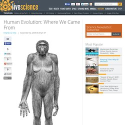 Human Evolution: Where We Came From
