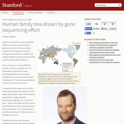 Human family tree drawn by gene sequencing effort