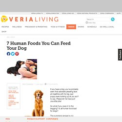 7 Human Foods That You Can Feed Your Dog