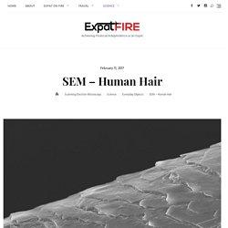 SEM – Human Hair – think you know your hair, think again