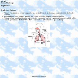 Human Physiology - Respiration