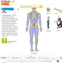 Human Skeleton for Kids