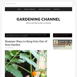 Humane Ways to Keep Cats Out of Your Garden
