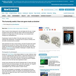 One gene helped human brains become complex - life - 03 May 2012