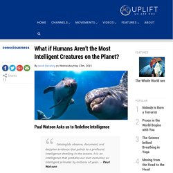 What if Humans aren't the Most Intelligent Creatures on Earth?