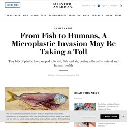 SCIENTIFIC AMERICAN 04/09/18 From Fish to Humans, A Microplastic Invasion May Be Taking a Toll