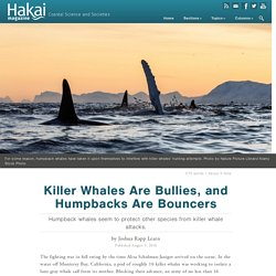 Killer Whales Are Bullies, and Humpbacks Are Bouncers