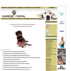Erkrankungen der Harnwege beim Hund