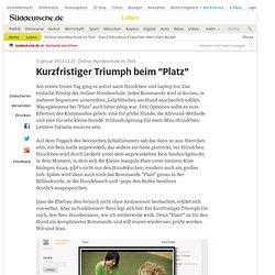 """Online-Hundeschule im Test - Kurzfristiger Triumph beim """"Platz"""" - Leben"""