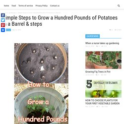 Simple Steps to Grow a Hundred Pounds of Potatoes in a Barrel & steps gardening - tips
