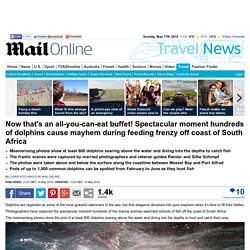 Hundreds of dolphins cause mayhem during feeding frenzy off coast of South Africa