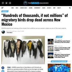 """Hundreds of thousands, if not millions"" of migratory birds drop dead across New Mexico"