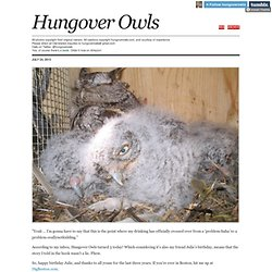 Hungover Owls