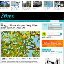 Hungry? Here's a Map of Every Urban Plant You Can Snack On - Henry Grabar