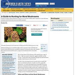 A Guide to Hunting for Morel Mushrooms - Organic Gardening