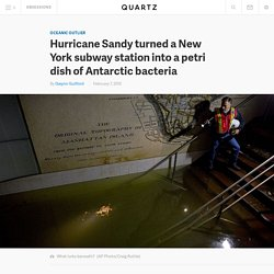 Hurricane Sandy turned a New York subway station into a petri dish of Antarctic bacteria